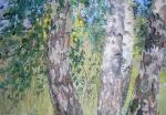 """""""Березы"""", холст, масло, 2009 г."""